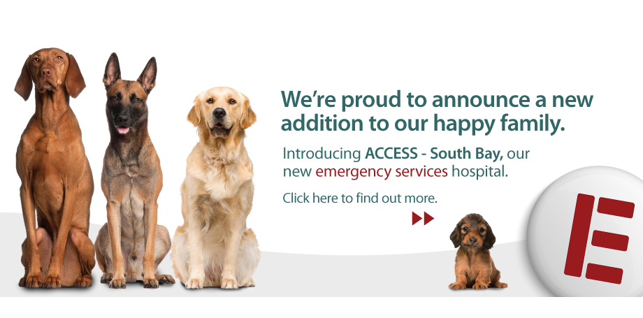 ACCESS-SOUTH_BAY-Home-Page-Banner