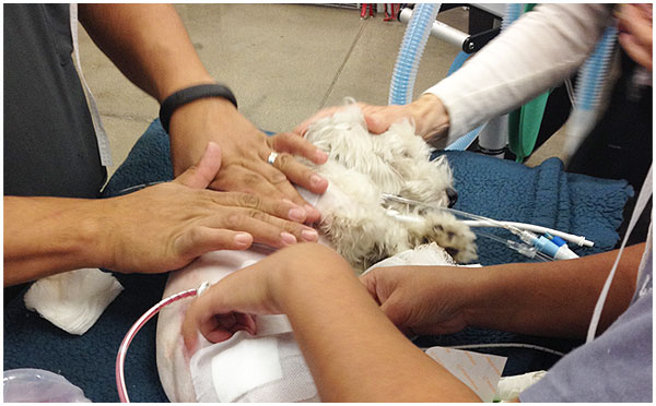 ACCESS-Specialty-Animal-Hospitals-Surgery