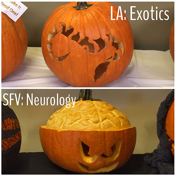 ACCESS-Pumpkin-Exotics-Neuro
