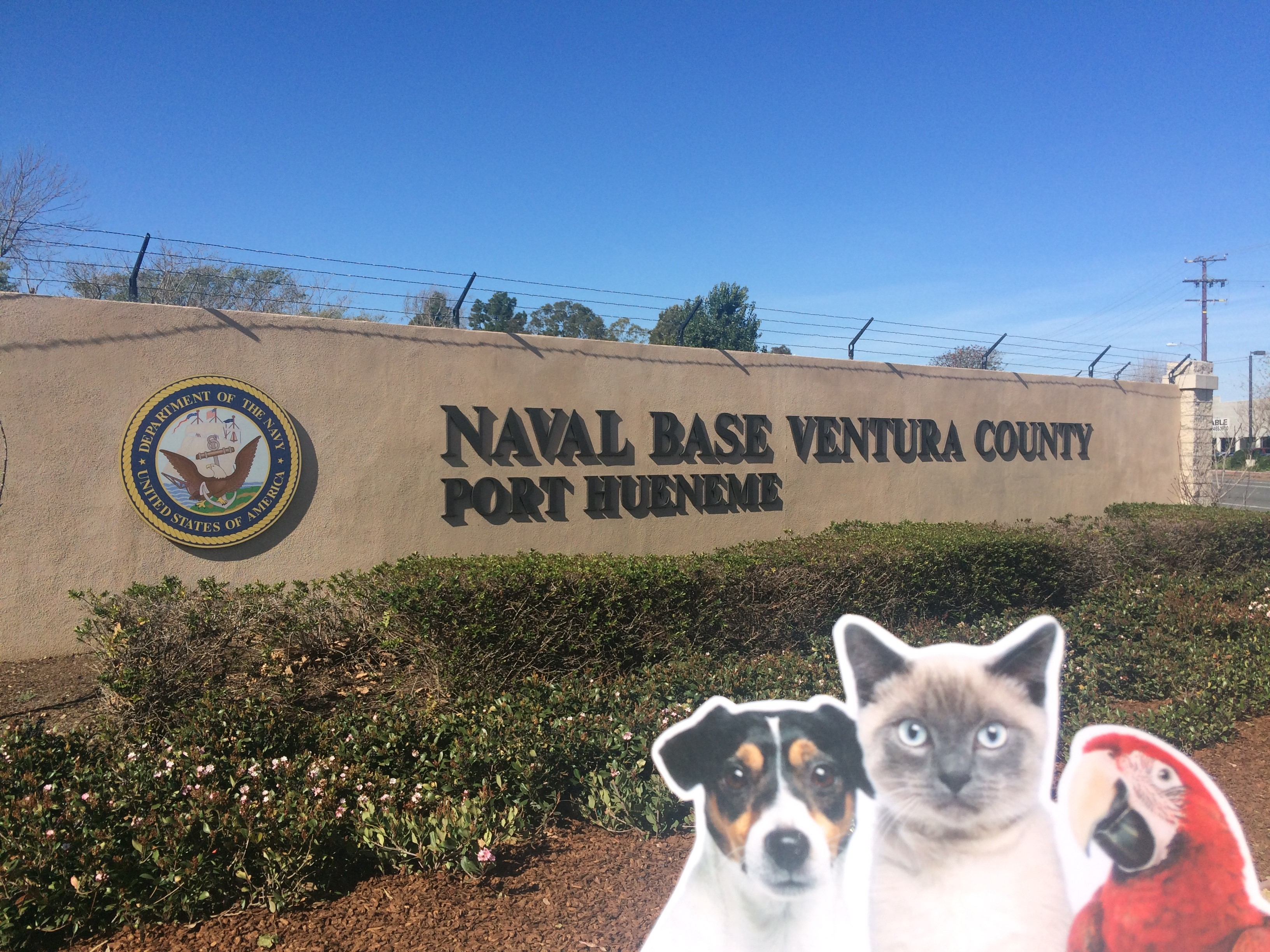 ACE Tails from the Road 2.24.16 Navy Pic