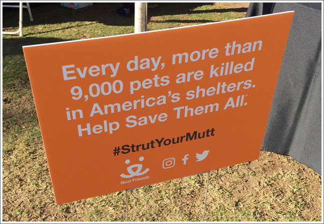 access-specialty-animal-hospital-strut-your-mutt-a