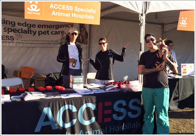 access-specialty-animal-hospital-strut-your-mutt-c