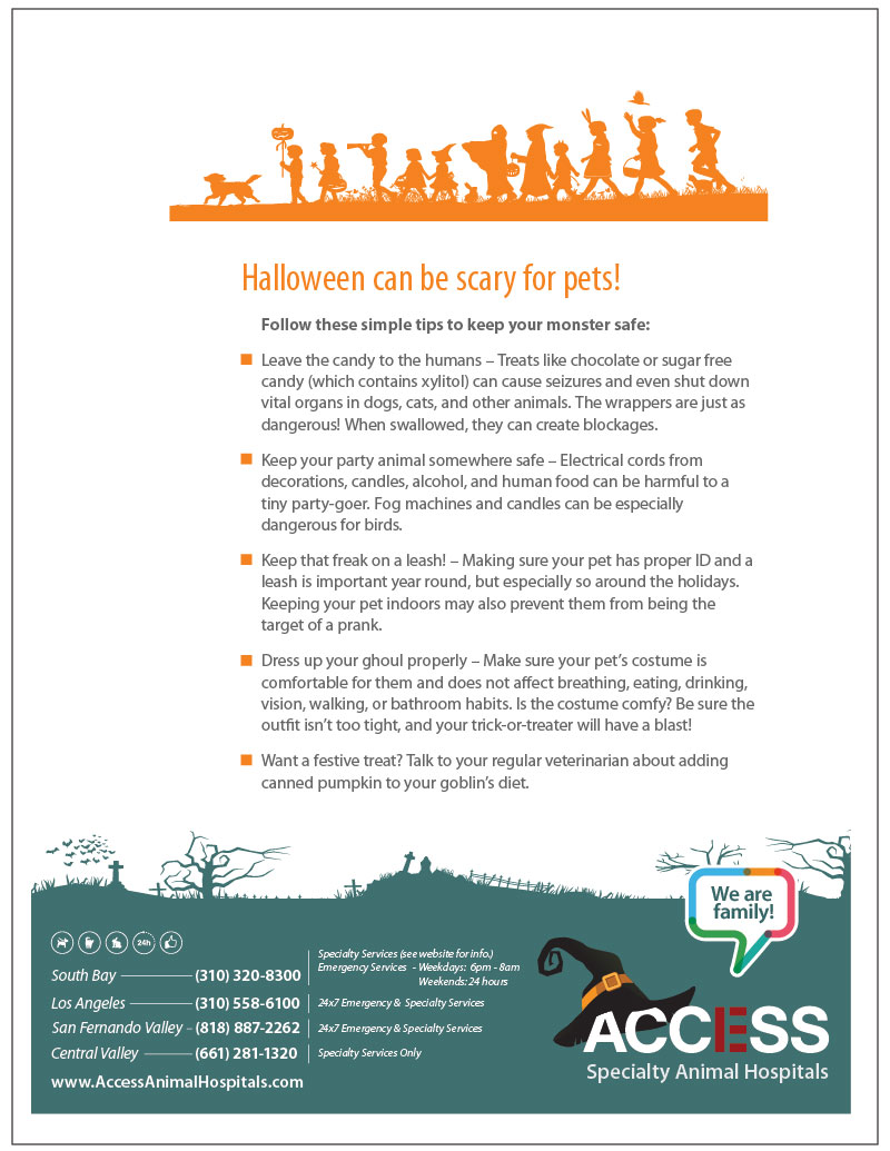 access-halloween-pet-tips-16-website-e