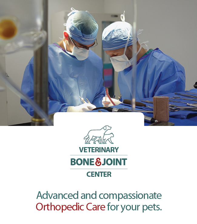 access bone amp joint center access specialty animal hospitals